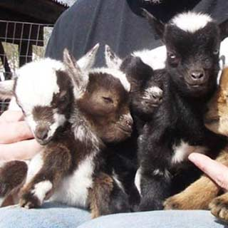 Book a Petting Zoo Pittsburgh